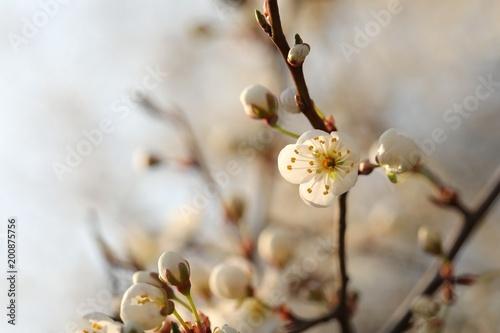 Spring Flowers Blooming On A Tree Stockfotos Und Lizenzfreie