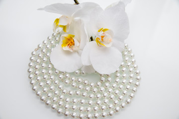 pearl and white orchid on a white glass