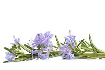Rosemary sprig in flowers