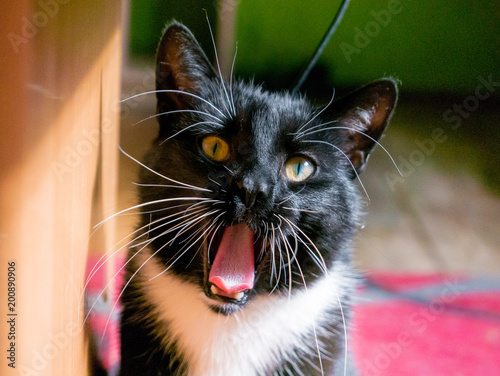 Black Cat Yawning Stock Photo And Royalty Free Images On Fotolia