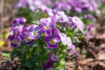 Spring flowers blooming.