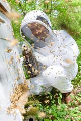 Beekeeper applying smoke to swarm of bees