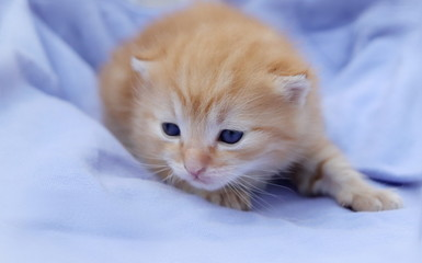 Small cute kitten