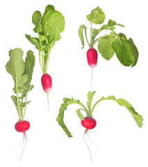 four ripe radishes with green leaves on white