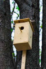 The wooden birdhouse on a tree in spring forest