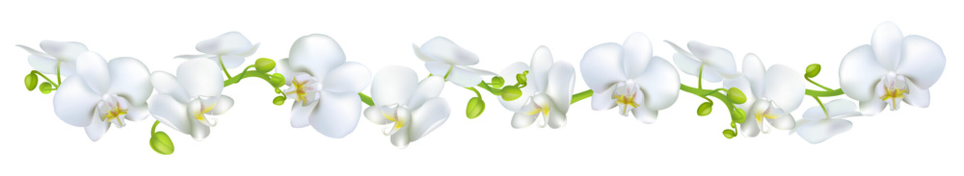 Orchids. Flowers. White. Tropical plants. Isolated. Floral background. Horizontal pattern.