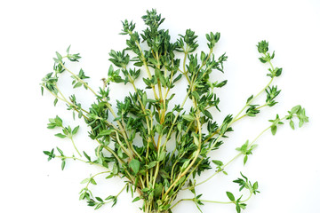 Bouquet of fresh thyme twigs on white background