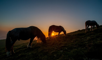 horse grazing in the mountains at sunset