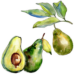 Exotic green avocado wild fruit in a watercolor style isolated. Full name of the fruit: avocado. Aquarelle wild fruit for background, texture, wrapper pattern or menu.