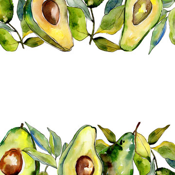 Exotic green avocado wild fruit in a watercolor style frame. Full name of the fruit: avocado. Aquarelle wild fruit for background, texture, wrapper pattern or menu.