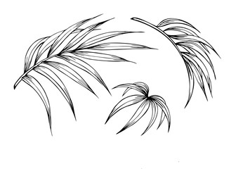 Palm leaves, outline black-and-white vector clipart.