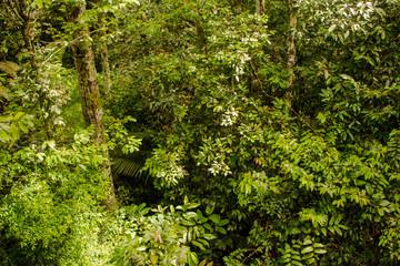 Bela paisagem com trilha no parque florestal da Amazônia, selva com várias árvores. Museu do Amazonas