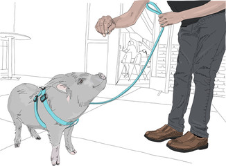 Cute, little pig getting a treat while out for a walk on leash on a city street. Hand drawn illustration.