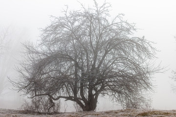 A lone tree on a foggy morning.
