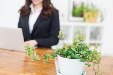 ラップトップコンピュータを見る女性と観葉植物 手元 ビジネス