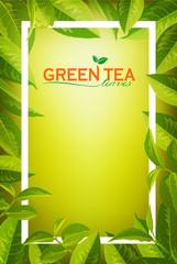 Green Tea  leaves on Orange background.