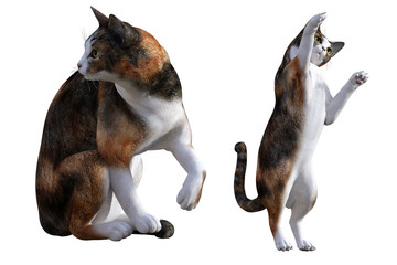 Cartoon cats isolated on white, 3d render.