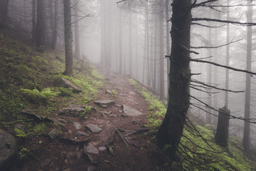 Beautiful view of mysterious foggy forest