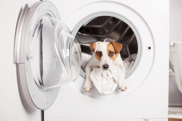 Dog in washer