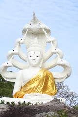 The buddha pictures