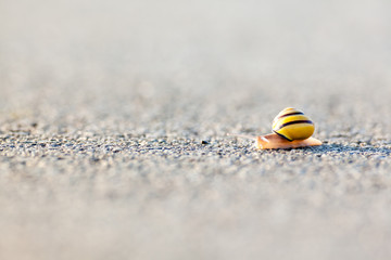 snail on the asphalt