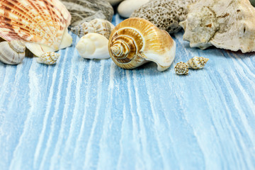 sea vacations concept with shells on blue wooden painted background