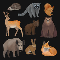Wild northern forest animals set, hedgehog, raccoon, squirrel, deer, fox, bear cub, wild boar, hare vector Illustrations on a black background