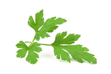 Perfect branch of a fresh parsley isolated o w ahite background in close-up.