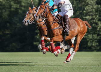 Battle of horse Polo Players in the game: horses in action