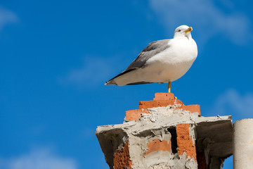 Seagull on a Chimney with a Blue Sky