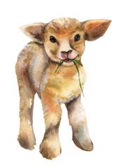 Lamb watercolor.
