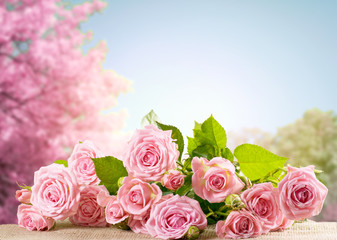 Pink rose flowers lying on sackcloth and spring trees with sakura blossoming branch