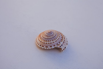 Macro view of colorful seashell on white background.