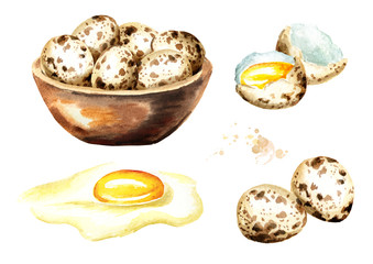 Quail eggs set. Watercolor  hand drawn illustration isolated on white background