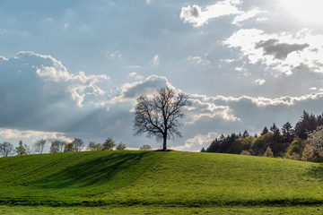 Bäume im Frühjahr