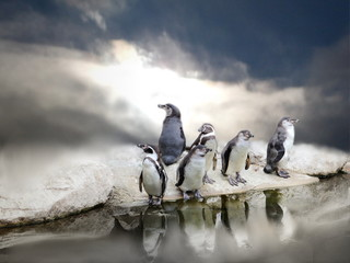 Penguins by water