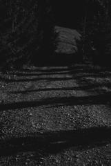 Village off-road in the Carpathian mountains. Beautiful ukrainian nature. Dark, gloomy, creepy road. Black and white