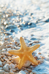 Sea star or starfish on pebbles beach in summer day.
