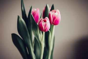 Schlichter Strauß Tulpen vor neutralem Hintergrund