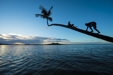 Silhouettes of young guys climb a palm tree overhanging calm tropical waters at sunset.