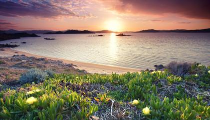 Fotomurales - alles blüht am Meer