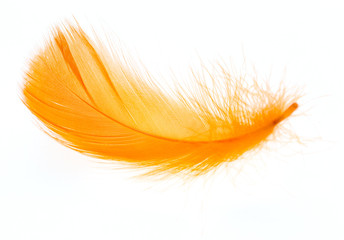 Beautiful orange feather on white background Wall mural