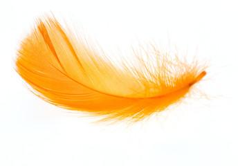 Beautiful orange feather on white background Fotoväggar
