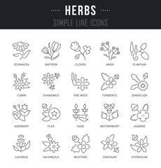 Set Vector Line Icons of Herbs.