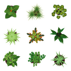 Realistic Detailed 3d Top View Green Plants Set. Vector