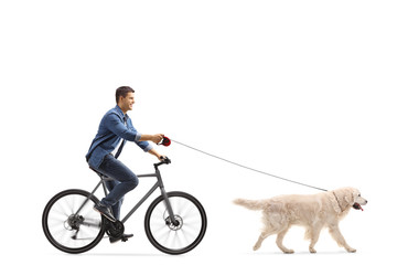 Man cycling with a labrador retriever dog