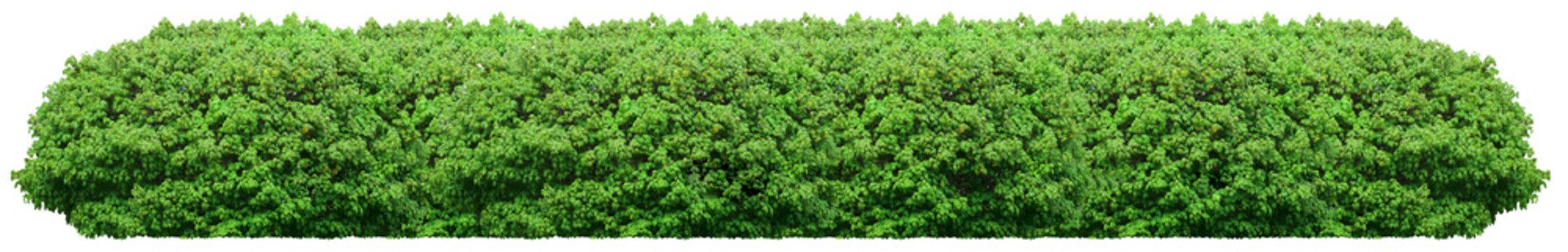 Fresh green bush isolated on white background