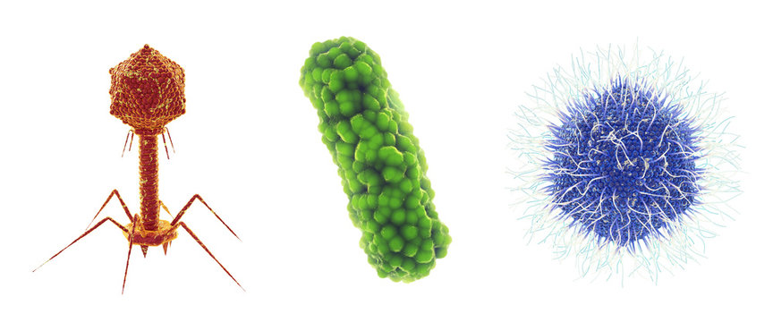 Bacteriophage virus , bacterium and Mimivirus , Set of microscopic germs that cause infectious diseases , isolated on white, Viral and bacterial infection