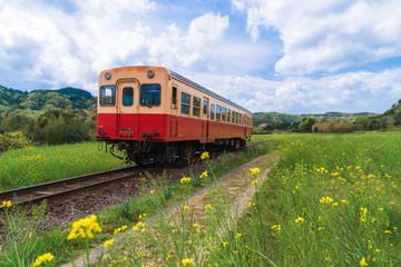 【千葉】小湊鉄道と菜の花畑