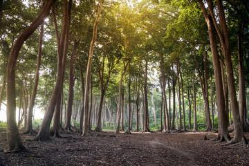 Beautiful lush forest
